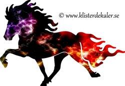 Single Icelandic horse 19 Eld