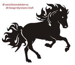 Enkel Islandshäst 20 galopp