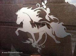 Single Icelandic horse 24