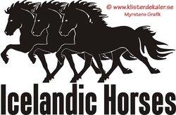 Triple Icelandic horse 4