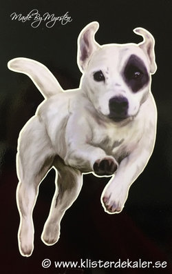 Jack russell, bumper