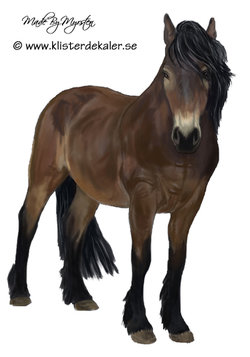 North Swedish horse, bumper