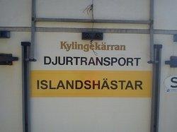 Transportdekal 20x90 eller 13x80  ISLANDSHÄSTAR