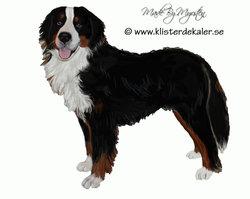 Bernese Mountain Dog, sticker