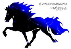 Single Icelandic horse Midnight