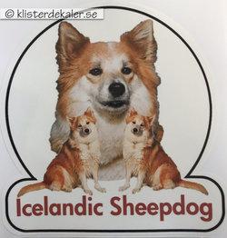 Bildekor. Isländsk fårhund 4