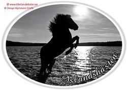Increasing Iselandic horse