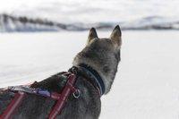 Dog Harness X-back Combi