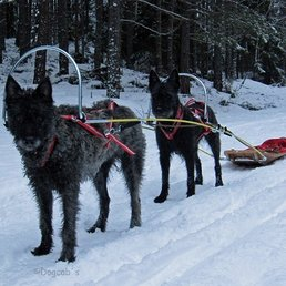 Dogshaft Lenghtener