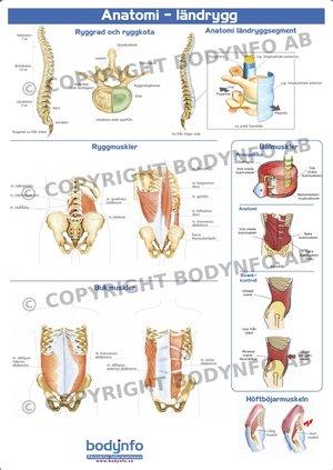 Anatomi ländrygg