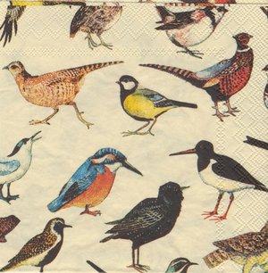 Små fåglar   kaf1043