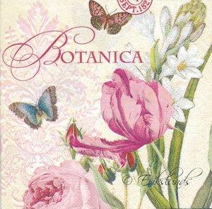 Botanica   kaf4028