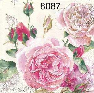 Rosa ros  8087