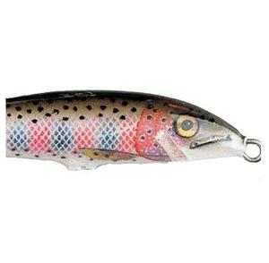 Original Ledad Rainbow Trout