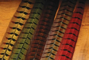 Ringneck Pheasant Center Tail Feathers
