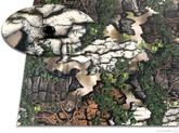 Kydex Treezyn Early Seezyn 2,0 mm