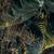 Marduk - Opus Nocturne - CD