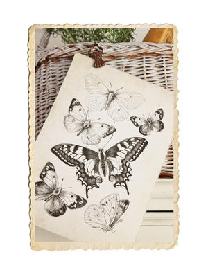 Fjärils tryck
