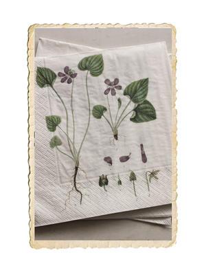 Paket med fina servetter, viol