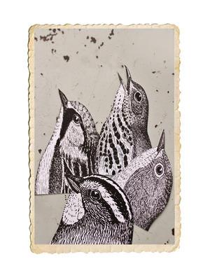 Set med klistermärken med fågeltryck, finns i flera olika storlekar