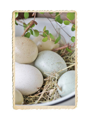 Äkta ägg i dova färger