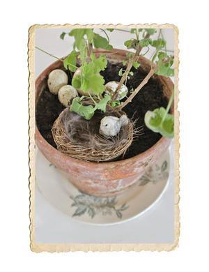 Litet fågelbo gjort av naturmaterial