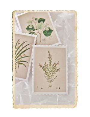 Set med gulliga botaniska mini klistermärken