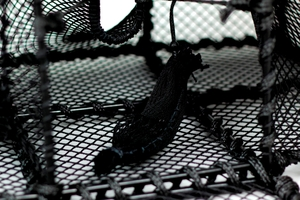 Leppefiskbur, dubbla svältkammare