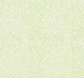 Mus öron, gröna mot vitt