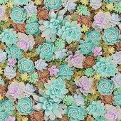 Robert Kaufman Cactus