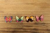 Knappar fjärilar