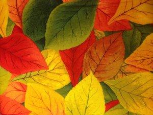 Fading Into Fall
