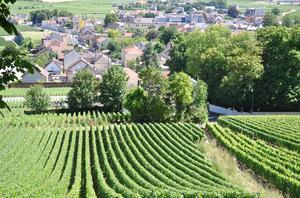 Mousserande vin/champagne kurs våren 2020