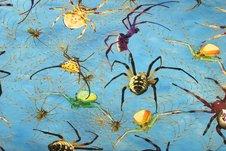 Spindlar