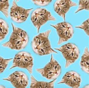 Katter - EKOLOGISKT
