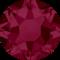 Ruby (501)