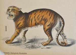 Gammal skolplansch, Dybdahls Zoologiska