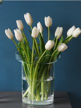 Limelight Vase Clear Tulip