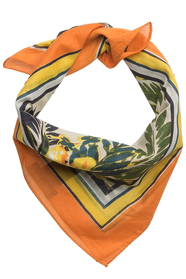 Hibiscus bandana