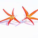 Underwater World: Red Star Earstuds, 2013