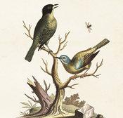 Juliste Linnut 18 * 24 cm