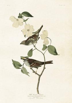 Juliste Linnut 35 * 50 cm