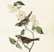 Poster Fåglar 35 * 50 cm