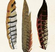 Poster Fjädrar 18 * 24 cm