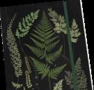 Muistikirja Saniainen