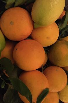 Misto Citrus 7 kg Slut för säsongen