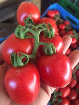 MISTO 3kg Tomater