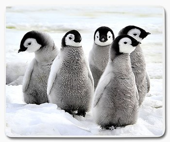 Pingvinungar musmatta