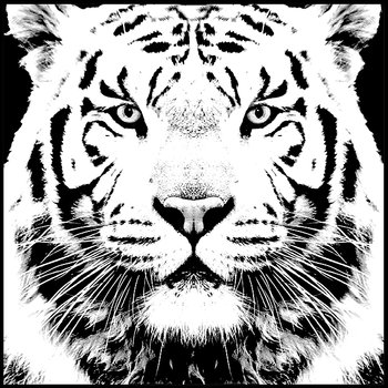 Svart vit tiger light black and white - poster