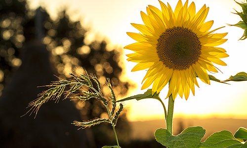 Sommaren är här!  Ladda inför sol och värme